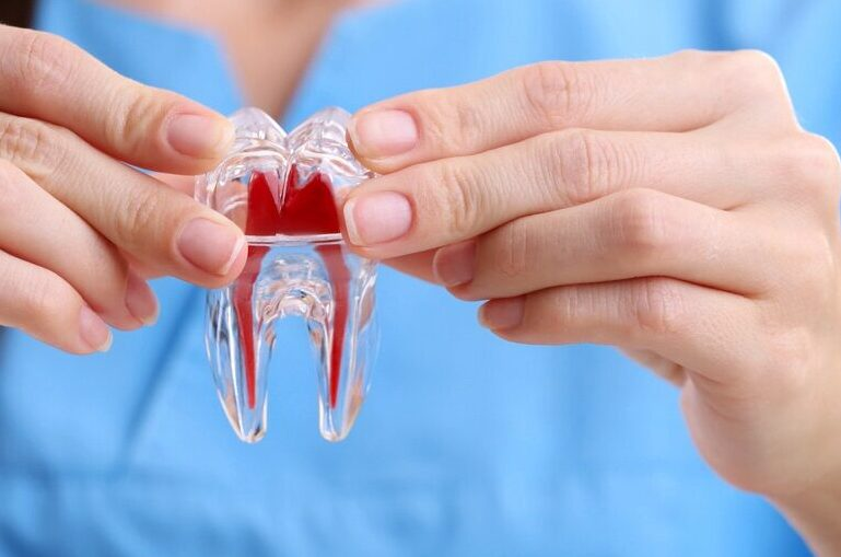 female-dentist-holding-tooth-model-close-Stem-Cell-Fillings-ss-FEATURE-
